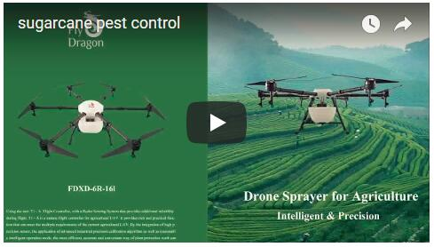 Drone sprayer working on sugarcane pest control